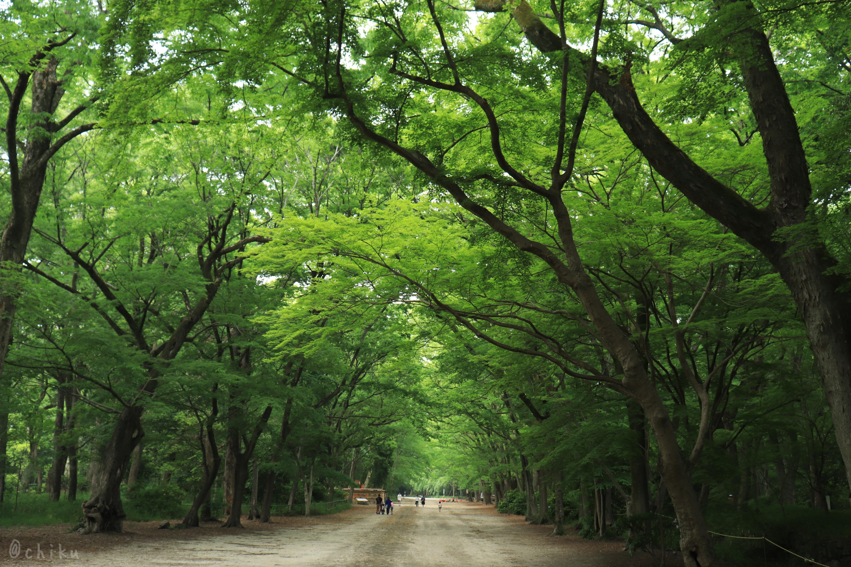 【京都旅行ブログ】2泊3日の京都旅行!新緑の季節の京都旅は超癒し #1