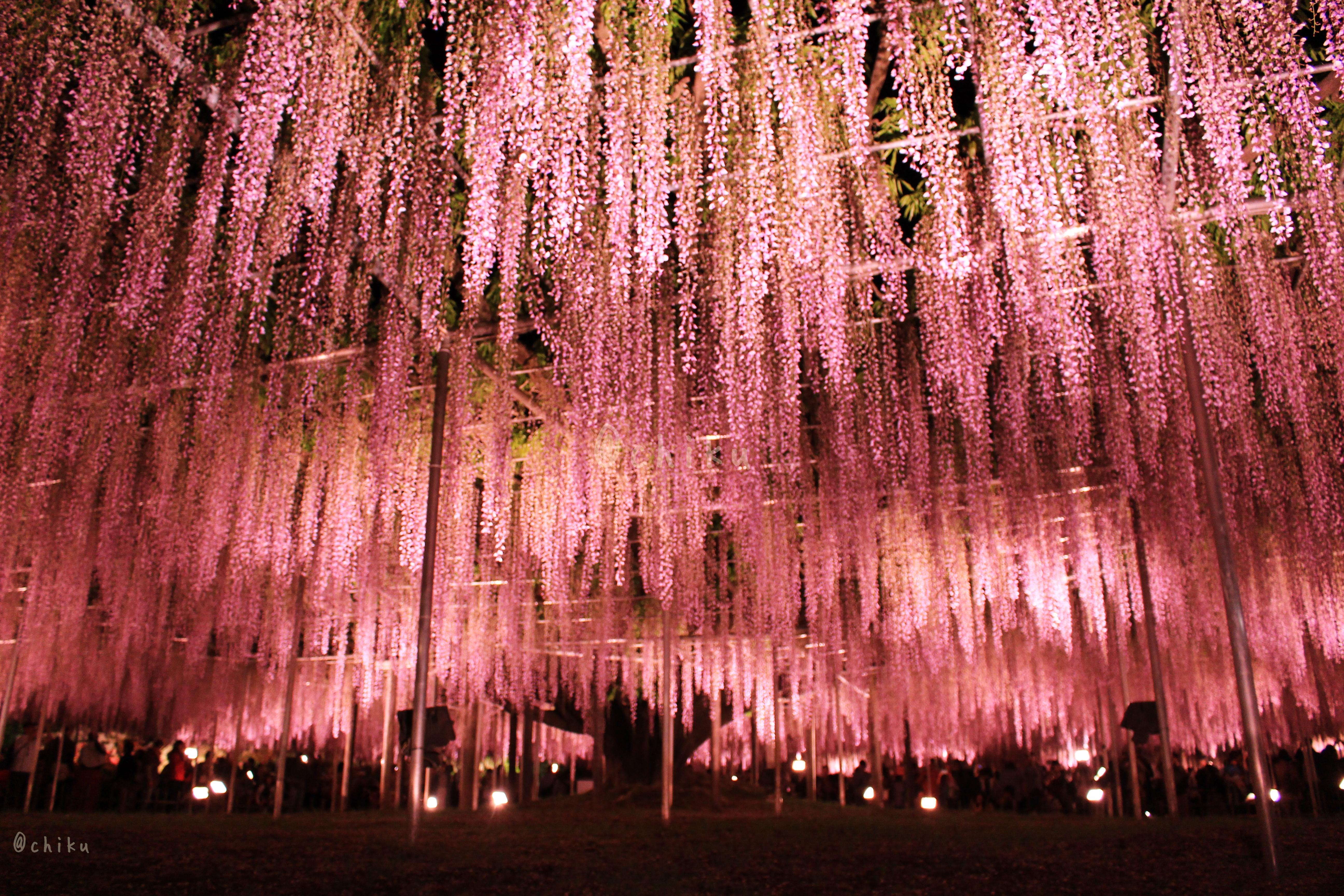 【足利旅行ブログ】1度は訪れたい栃木県足利市の王道も穴場も完全網羅