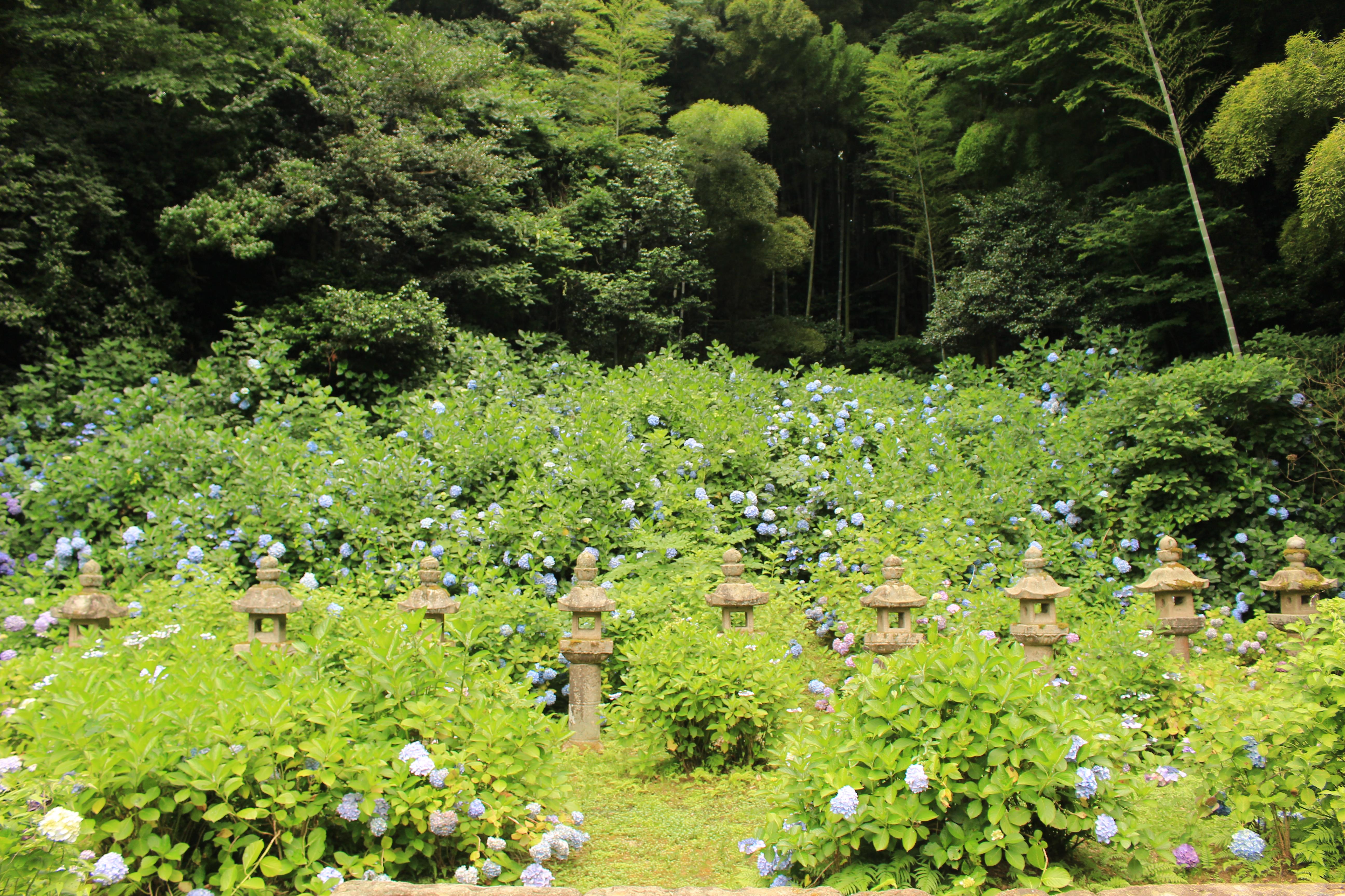 【島根旅行ブログ】初夏の島根&鳥取2泊3日!#2 【松江市内編】