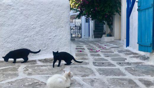 【ミコノス島旅行ブログ】猫ホテルとオススメレストラン!エーゲ海7泊8日 #4