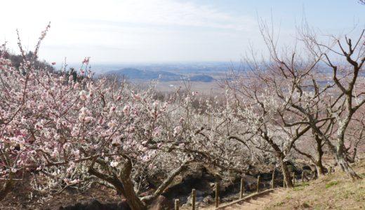 【茨城旅行ブログ】筑波山梅まつりを楽しみつつ、筑波山全体を満喫した日帰り旅【温泉もあるよ!】