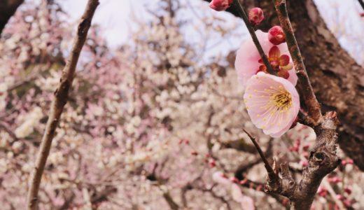 【茨城旅行ブログ】梅が見頃の水戸で梅&寺社巡り&気になるお店巡りをした日帰り旅